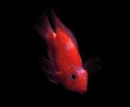 MOPyFish