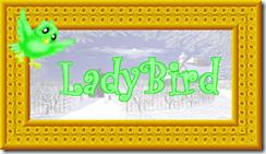 2011 01 16 C ladybird