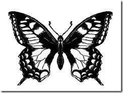 image_papillon