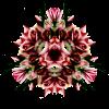 BOUQUET-FLEUR-ROSE-0501093'''''''100