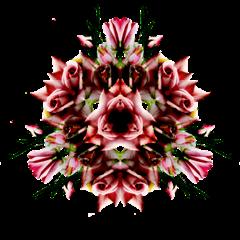 BOUQUET-FLEUR-ROSE-0501093'''''''