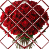 bouquet001 TR96px 100