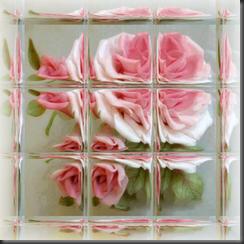 Rose005