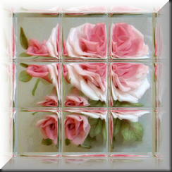 Rose006