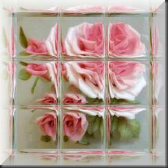 Rose007