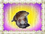 2014-03-07-10.23.11j100Csparateur-04FBFO_thumb.png