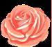 jolies-petites-fleurs-vecteur--4_15-13111'
